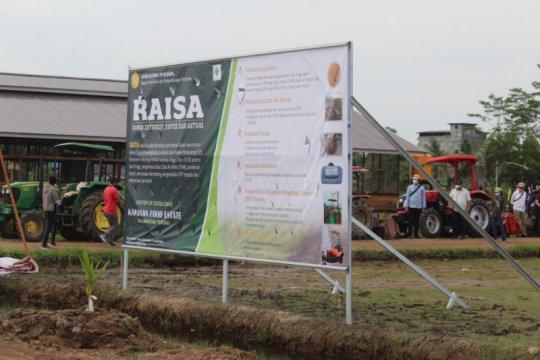 Balitbangtan terapkan Teknologi RAISA di food estate Kalimantan Tengah