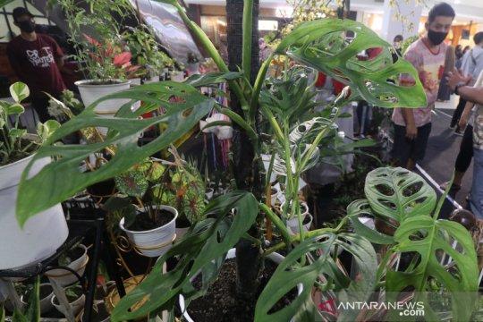 Pameran tanaman hias di Kediri