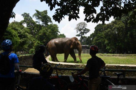 Warga berlibur ke Taman Margasatwa Ragunan