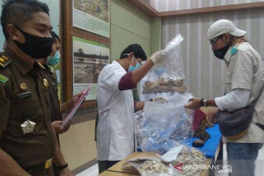 Kejari Bener Meriah serahkan kulit harimau ke BKSDA