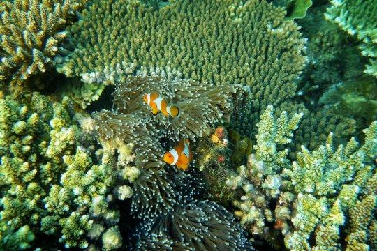UNESCO kembali akui tiga cagar biosfir Indonesia