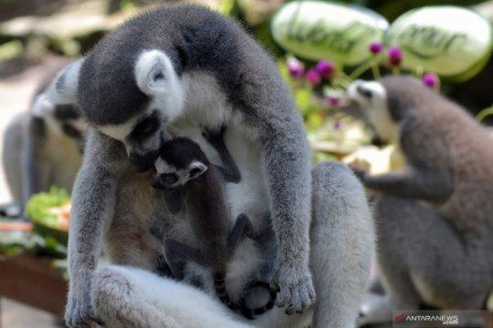 "Pandemi COVID-19, ""jeda"" untuk revitalisasi wisata Bali"