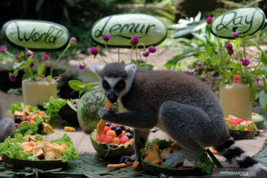 Hari lemur sedunia