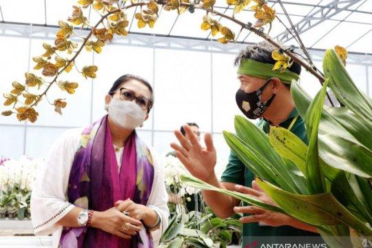 Putri Koster inginkan ada pameran khusus anggrek di Bali