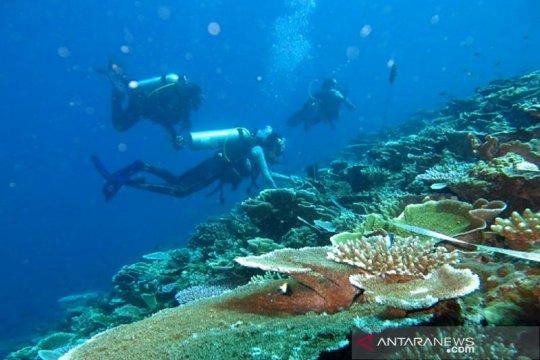Menteri Edhy: Menanam satu koral sama dengan 20 pohon