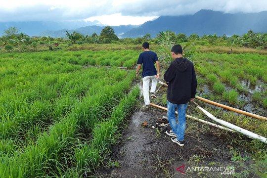 Gubernur paparkan strategi atasi defisit beras di Riau