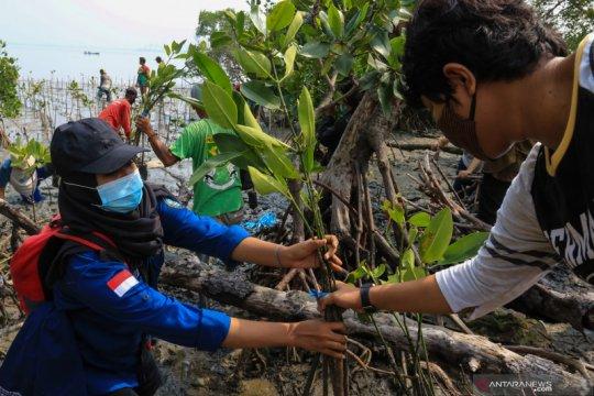 Tanam 455.000 bibit mangrove, KKP pekerjakan ratusan tenaga lokal