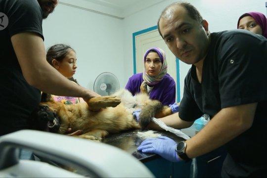 Mesir luncurkan inisiatif baru selamatkan hewan peliharaan dan liar