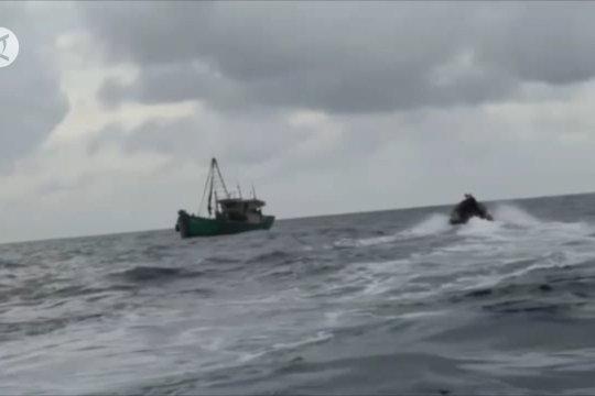 TNI AL Tangkap dua kapal ikan asing Vietnam