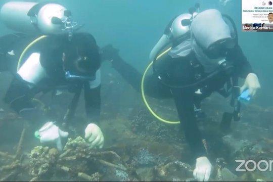 Program restorasi terumbu karang Bali serap 11 ribu pekerja