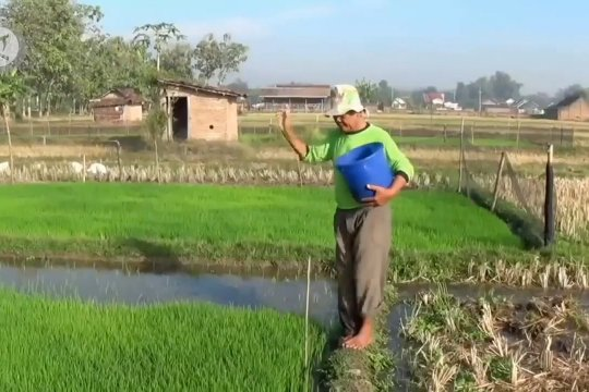 Hadapi pandemi, Pupuk Indonesia tetap berproduksi
