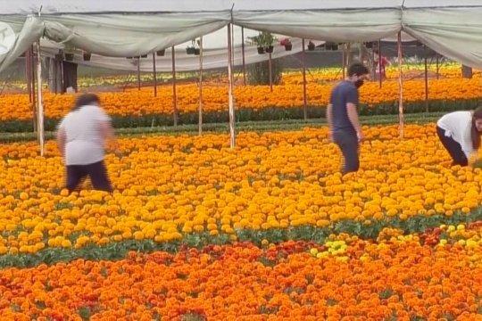 Perayaan Hari Kematian di Meksiko tak terhenti karena pandemi