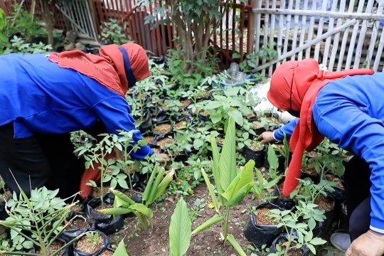 Peran KWT maksimalkan lahan, penguatan ketahanan pangan warga