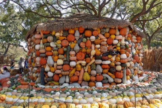 Desa Labu di Dallas bersiap sambut Halloween