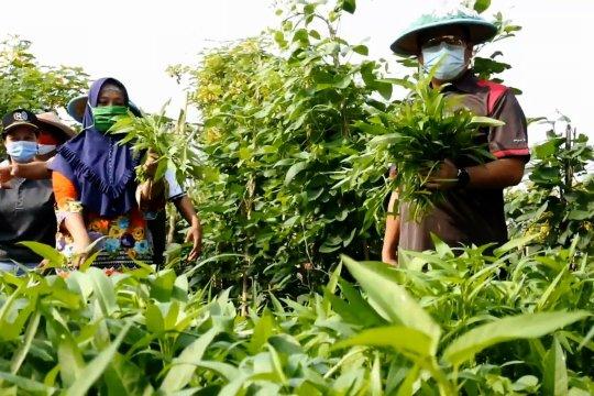 PSBB di Kota Tangerang dukung ketahanan pangan