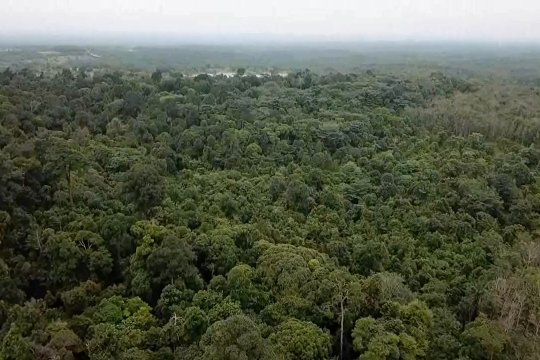 Upaya memperjuangkan hutan adat Suku Sakai