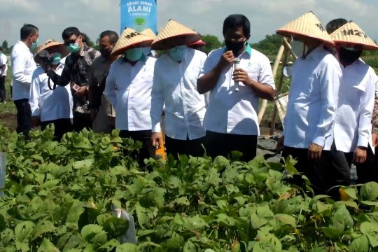 KemenkopUKM salurkan bantuan Rp30 miliar untuk petani edamame Jember