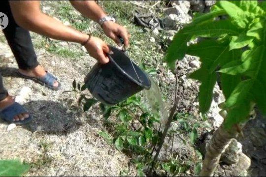 Konservasi air, komunitas masyarakat Gunungkidul tanam beringin
