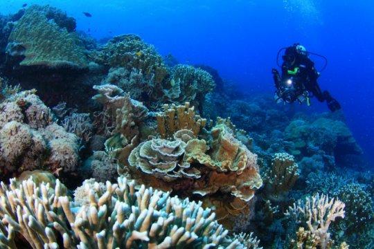 KKP gandeng asosiasi dan LSM dalam pelatihan kebun karang