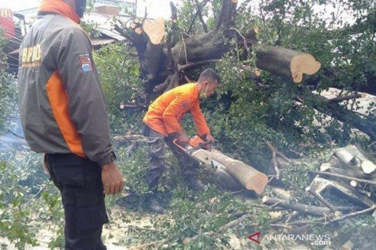 Pohon tumbang di Kota Bogor, empat warga alami luka-luka