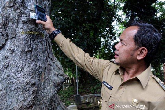 Wali Kota Bogor sebut tiga kategori pohon, waspadai yang rawan tumbang