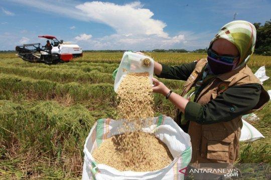 Legislator ingin Bulog fokus jaga ketahanan pangan, bukan cari laba