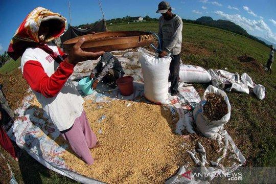 Mentan genjot produksi kedelai di Polewali Mandar Sulawesi Barat