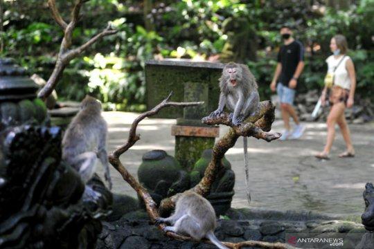 Monkey Forest Ubud kembali dibuka