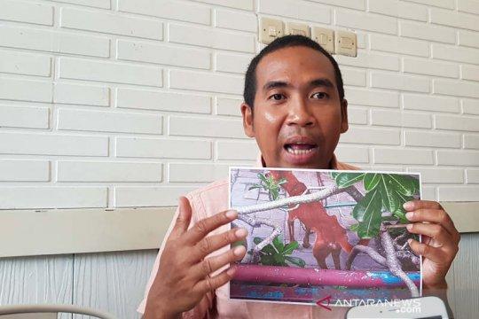 Aktivis: Menelantarkan hewan peliharaan bisa dipidana