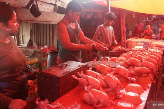 Harga ayam broiler di kabupaten ini melonjak, tembus Rp65 ribu/ekor