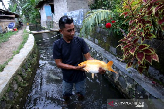 Budi daya ikan di bantaran sungai
