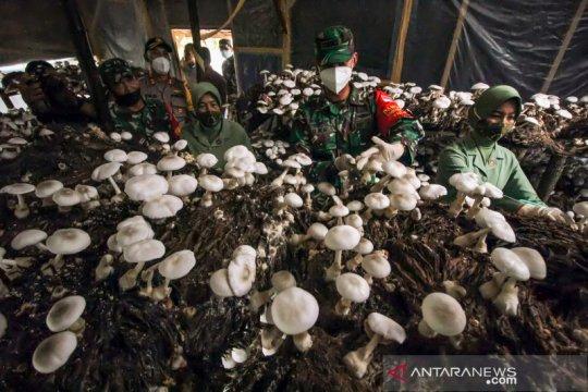 Budi daya jamur merang binaan TNI