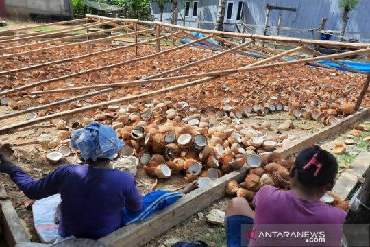 Anggota DPR: Larangan ekspor kelapa harus diikuti kebijakan harga