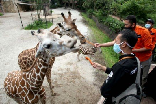Rumah Zakat salurkan bantuan pakan satwa ke 13 kebun binatang