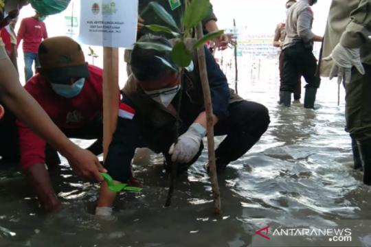 Wamen LHK ikut program padat karya penanaman mangrove di Sultra