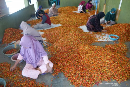 Harga cabai rawit merah di Gorontalo naik