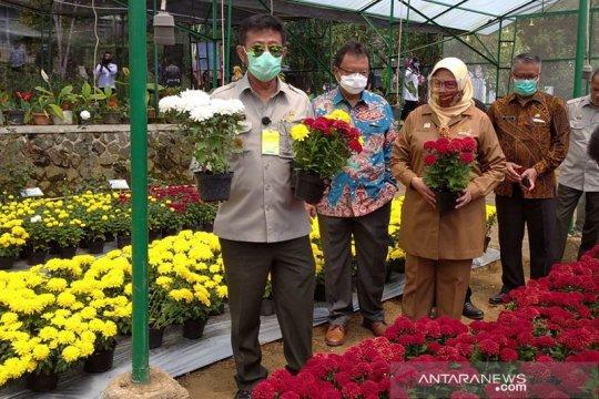 Mentan: Tingkatkan budi daya bunga krisan, permintaan ekspor tinggi
