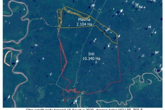 Korindo Group bantah lakukan pembakaran hutan di Papua