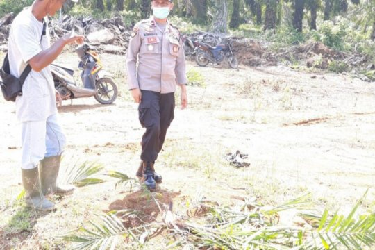 Polisi selidiki pelaku perusakan tanaman sawit perusahaan