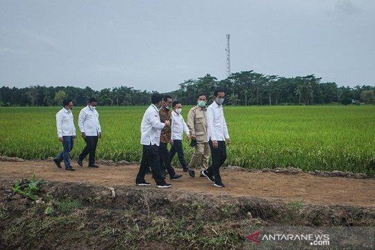 "Tingkatkan SDM, Kementan adakan bimtek petani ""food estate"" Kalteng"