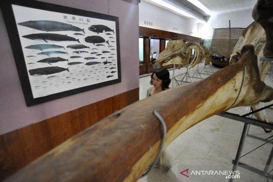 Museum Siwalima pikat pengunjung lewat kreativitas tradisional