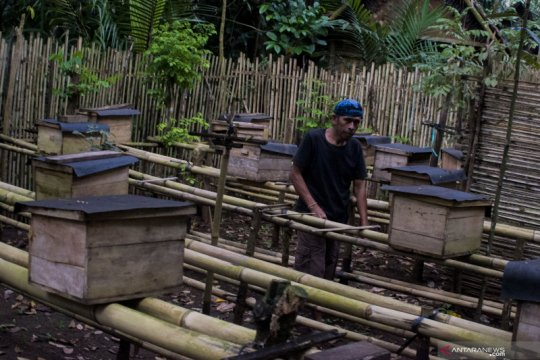 Produksi madu suku Baduy