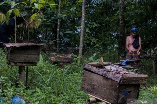 KLHK sebut konservasi hutan bagian dari upaya jaga kelestarian lebah