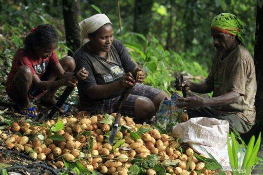 Produsen pala asal Belanda akan investasi Rp4,2 triliun di Papua Barat