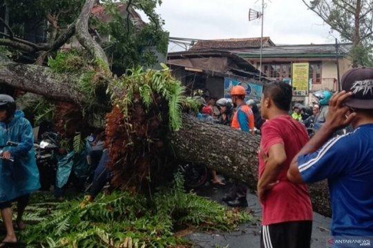 Jalur utama Cipanas-Cianjur terganggu akibat pohon tumbang