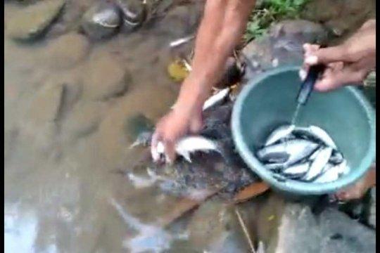 Ikan di Sungai Elo Temanggung mati diduga karena air tercemar limbah