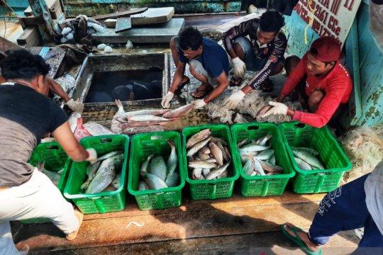 Hari Ikan Nasional, Perum Perindo edukasi masyarakat budaya makan ikan