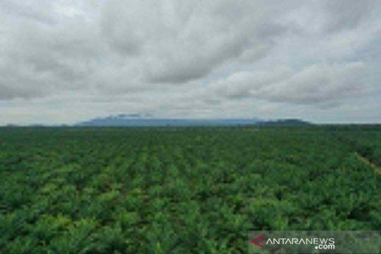 Tidak ada eksploitasi perempuan di kebun sawit Kalimantan Barat