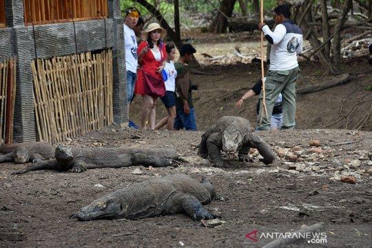 Jumlah wisatawan ke Pulau Komodo mulai melonjak dalam 3 bulan terakhir