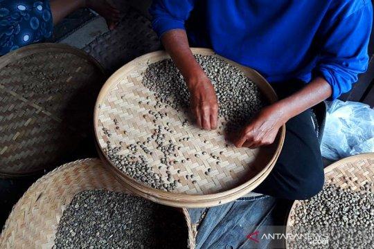 Pengelola kopi Bali optimis tingkatkan pemasaran